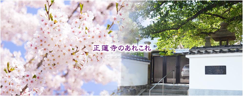 【正蓮寺のあれこれ】 | 北九州市門司区にある浄土真宗本願寺派・正蓮寺です。納骨堂はもちろん、他のお寺にはない軍馬塚があります。